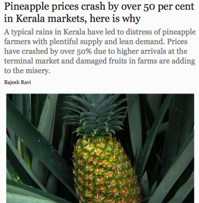 Pineapple prices crashed