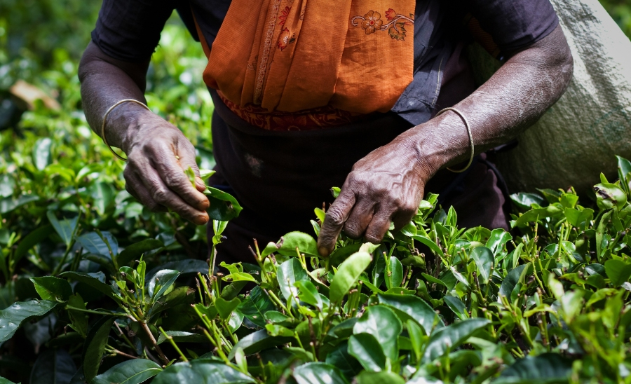 Fair Trade: A relentless idealism or a way of creating sustainable agri valuechain?